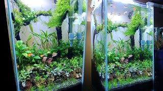 Aquascape In Tower Tank 30x30x50 No Co2 Napaqua29 Youtube