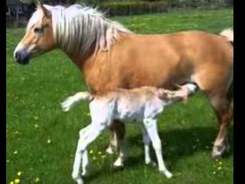 Frau bläst pferd einen nackt
