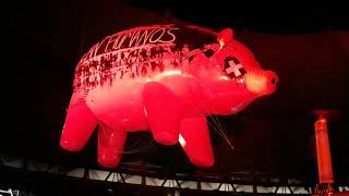 PIGS-ROGER WATERS-Estadio Ciudad de La Plata-6/11/2018