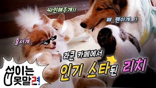 라쿤카페에 슈퍼스타 리치 등장!!ㅋㅋ feat.라쿤 [섭이는못말려]