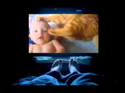 Funny cats annoying babies   Cute cat & baby compilation