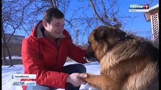 ВестиКрым.рф// Пёс добрался до Крыма из Челябинска