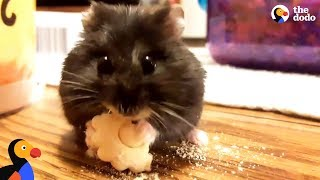 Everybody's Gotta Eat | The Dodo