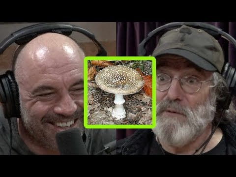 The Man Cave - Paul Stamets Describes Bad Trip on Incredibly Dangerous Mushroom