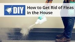 How To Get Rid of Fleas in The House - Indoor Flea Control Treatment