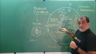 Membrana Plasmática Especial