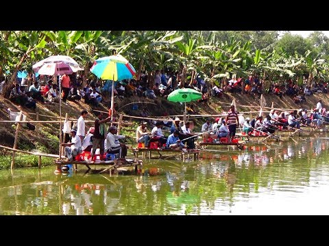 Fishing Competition in Village | Festival Fishing Video By Daily Village Life (Part-02)