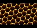 Why do bees build hexagonal honeycombs? - Forces of Nature with Brian Cox: Episode 1 - BBC One