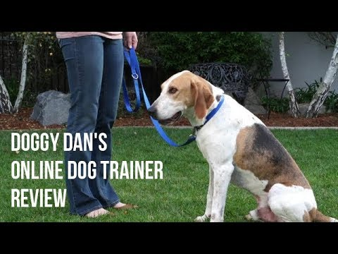 doggy-dan's-online-dog-trainer-review-and-testimonials