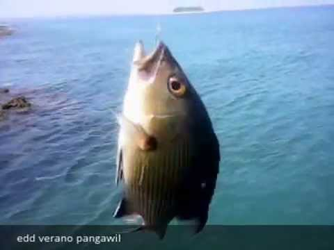 Fishing in Philippine Sea