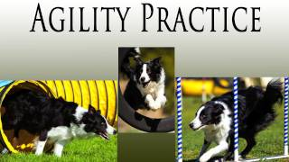 Agility Practice - Clicker Dog Training