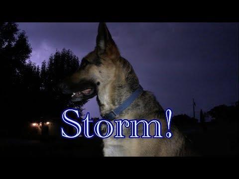 Lightning Storm with 105lb German Shepherd