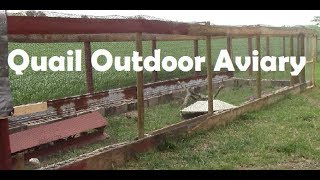 Quail Outdoor Aviary | Quail Coop Outdoor | Raise Quail Outdoor | How to build Quail coop or Cage