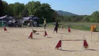 アジリティ練習会:ハイネのジャンピング2度.