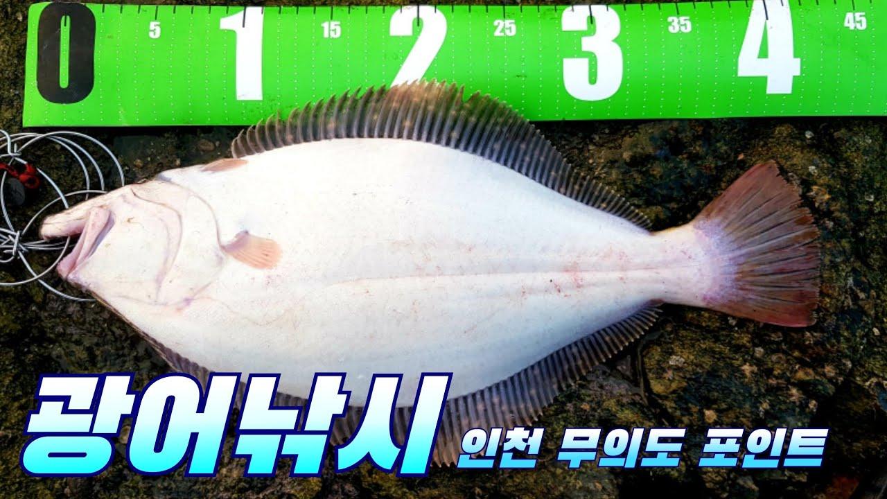 광어낚시 인천 소무의도 광어 포인트 루어낚시 flatfish fishing