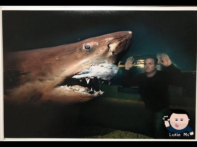 Update On ROSIE The shark / Abandoned Wildlife Park Viral Video Original footage