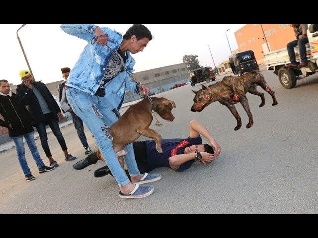 سمعت كلامكم ونزلت الشارع | جابولي كلب بيتبول مفترس أعلمكم عليه الدفاع عن النفس  Defense against Dog