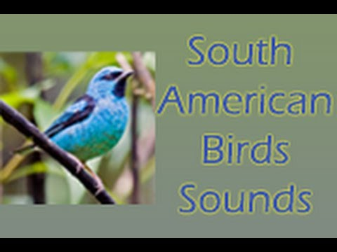 South American Birds Sounds Android App