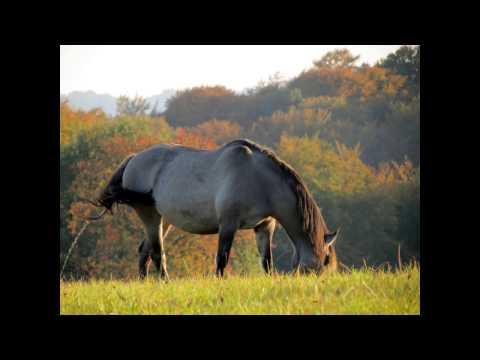 Giftanschlag auf Pferde