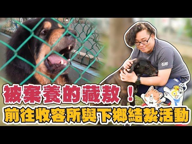 【Joeman】被棄養的藏獒!前往動物收容所與下鄉結紮活動