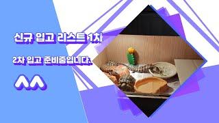 파충류 신규 1차 입고 리스트!(+레오파드 육겁 포함!…