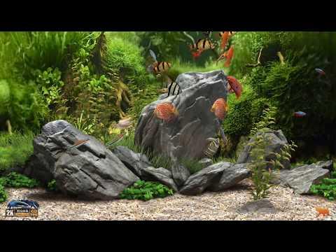 Nuevo Protector De Pantalla Dream Aquarium 2019 Full HD Y 4K