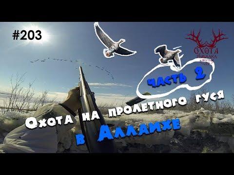 ЧАСТЬ 2! Аллаиха - охота на пролетного гуся