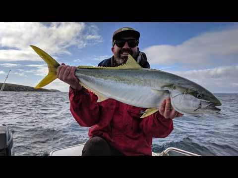 Yellowtail Kingfish Fishing In Victoria 2018