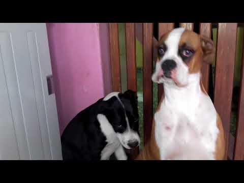 Retando a Sampi y Rufina Boxer