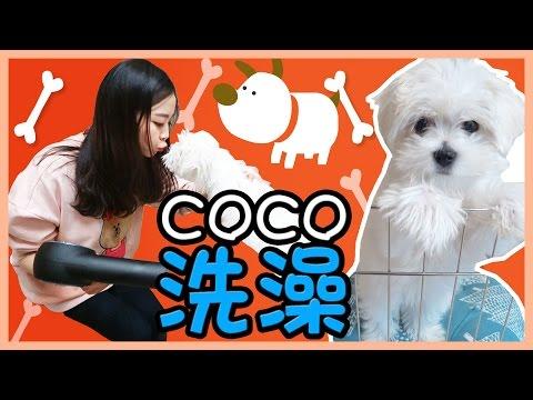 一起來給coco洗澡吧!   小伶玩具 Xiaoling toys