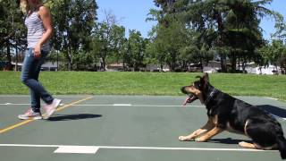 Dallas Dog Training Highlights Download