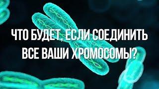 Что будет, если соединить все ваши хромосомы [Plushkin]