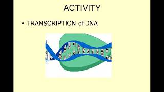 Honors Biology-DNA 12-3  RNA and protein synthesis