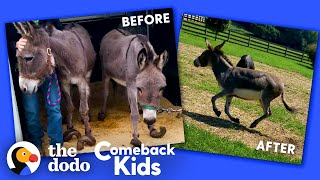 Donkey With Overgrown Hooves Runs Free For The First Time   The Dodo Comeback Kids