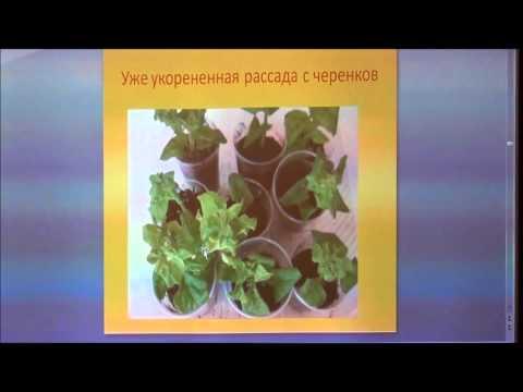 """Семинар на тему: """"Однолетние цветы через рассаду """".  Часть 1"""