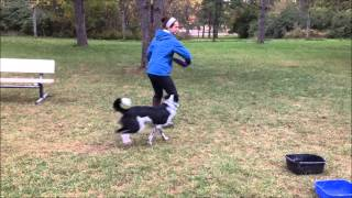 Jake The Frisbee Dog