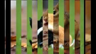 The most amazing slideshow of animals ever! xxx