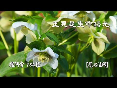 雜阿含784經-(1)正見是生命曙光【覺心法師】