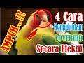 Ampuh  Cara Menjodohkan Lovebird Secara Efektif Kicau Q  Mp3 - Mp4 Download