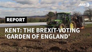 In pro-Brexit Kent, farmers count on EU workforce