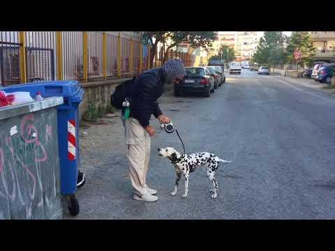 Teaching my Dalmatian dog ecology