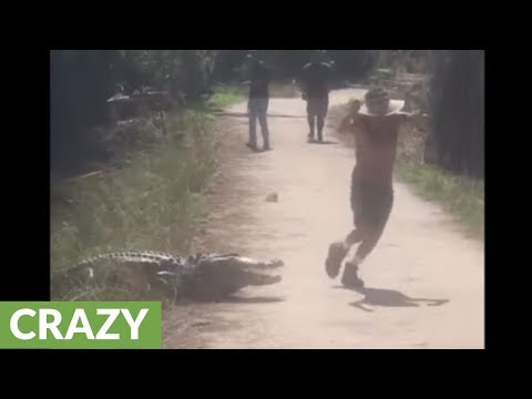 Lori Bradley - Jogger almost runs into the mouth of a gator!