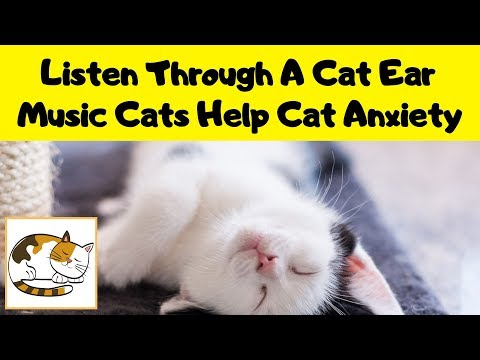Listen Through A Cat Ear - Music for Cats to Help them Relax from Anxiety and Stress