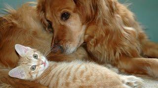 Приколы с Животными! Это любовь! Смешное видео! Смешные животные