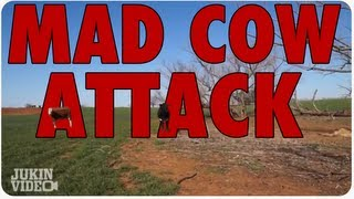 Mad Cow or Bull Attack