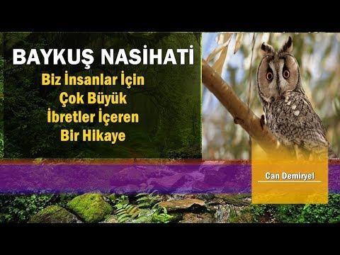 Hz.Süleyman ile Baykuş Arasında Geçen Konuşma Büyük İbret İçeren Hikaye (Can Demiryel)