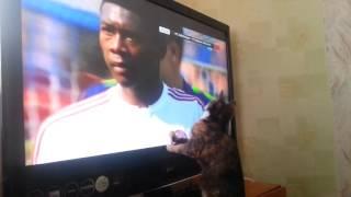Кошка смотрит футбол.ржака полная!!!!смотреть всем