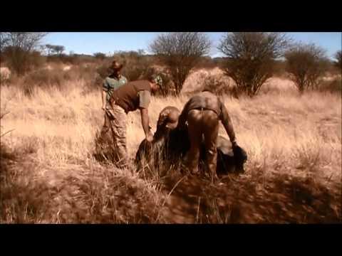 African hunting safari 2014