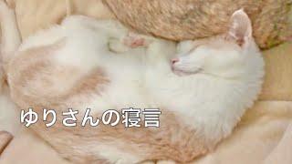 ゆりさんの寝言 Yuri's sleepy talk thumbnail