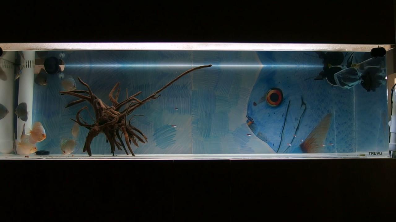 Freshwater fish no filter - Discus Fish Tank 80 Gal No Filter